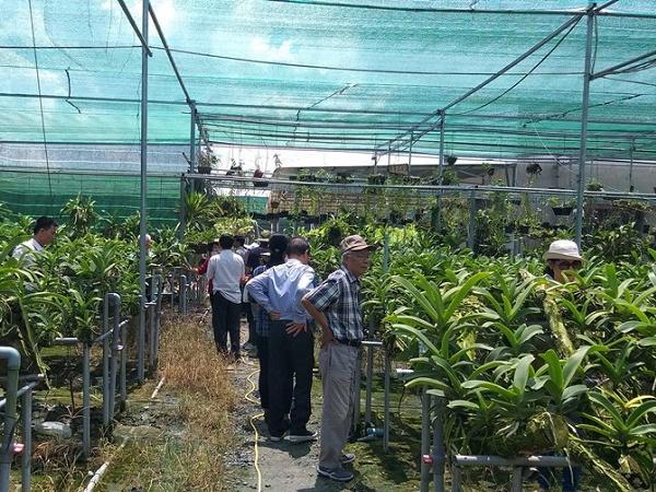 Tây Ninh: Trồng lan Ngọc điểm cho thu nhập cao