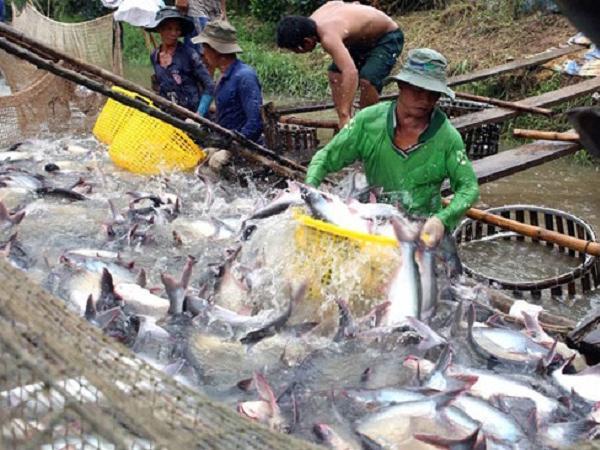 Bất ngờ thị trường tôm và cá tra trong quý III