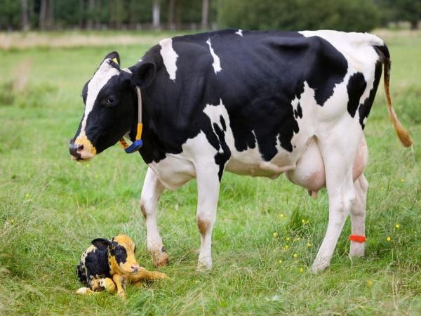 Nông nghiệp thông minh - thay đổi để phát triển