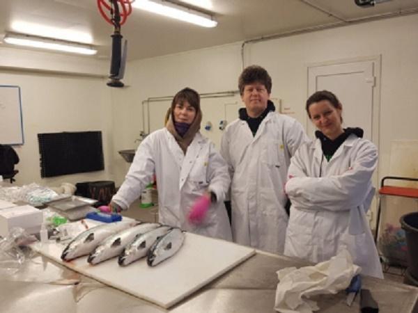 Làm thế nào Na Uy có thể đánh bại bệnh viêm tuyến tụy ở cá hồi?