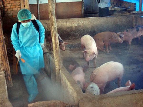 N-Quy trình vệ sinh chuồng trại chăn nuôi