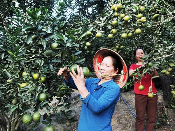 Tuyên Quang xây dựng vùng nông nghiệp công nghệ cao
