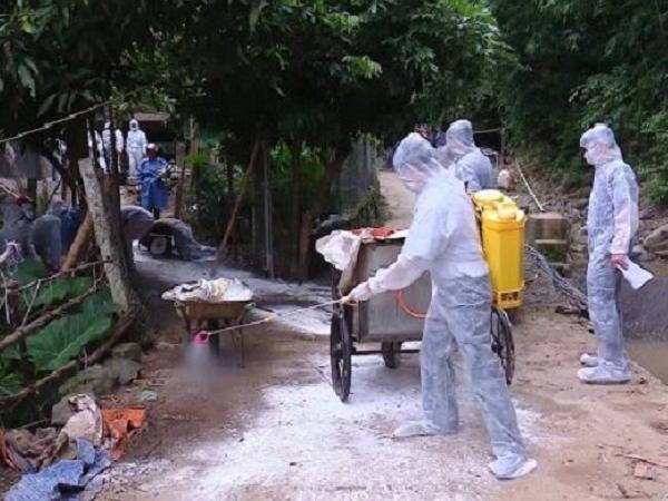 Những điều cần biết về đợt tiêu độc môi trường chăn nuôi phòng chống dịch bệnh
