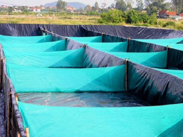"""NT-Dùng công nghệ """"zic zac"""" lọc nước nhanh trong nuôi tôm vụ đông"""