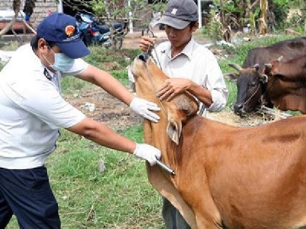 N-Một số điều cần biết khi sử dụng vaccine trong chăn nuôi