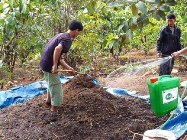 CS-Cách ủ cá, đậu tương và phân gà làm phân bón hữu cơ sạch cho cây trồng bằng chế phẩm EM