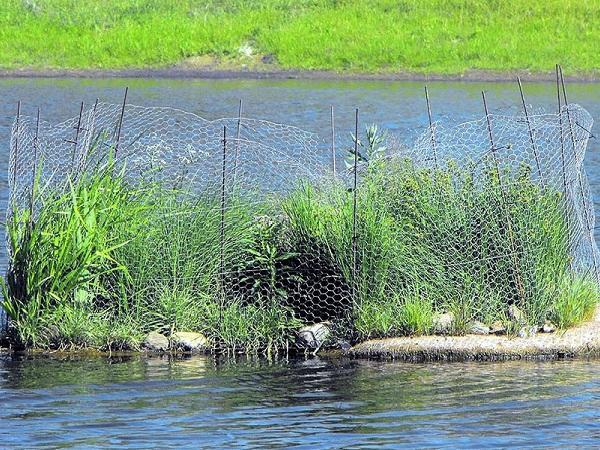 NT-Làm đảo nổi thực vật để loại bỏ nitơ và photpho trong nước nuôi
