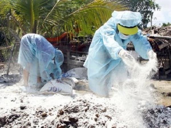 Ổ dịch mới: Mất trắng vì tiêu hủy hơn 11 tấn lợn mắc dịch tả lợn châu Phi