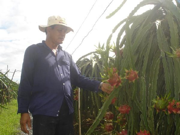 Rào cản kỹ thuật hạn chế lượng nông sản xuất khẩu Việt Nam