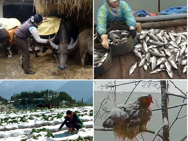 Mùa Đông đến sớm và rét kỷ lục, ngành nông nghiệp cần chuẩn bị gì để tránh thiệt hại?