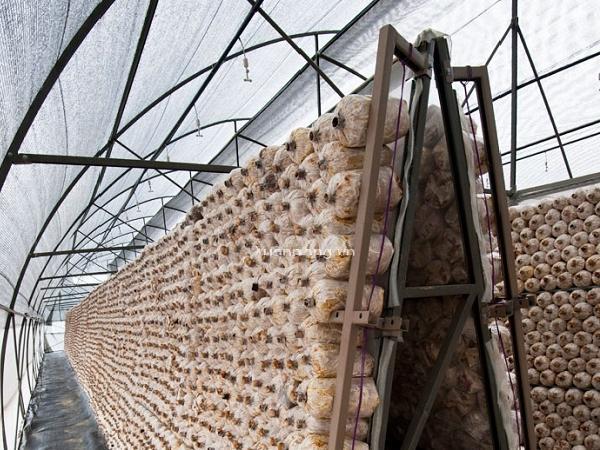 Những thiết bị cảm biến quan trọng trong trồng trọt – Phần 1: Cảm biến CO2
