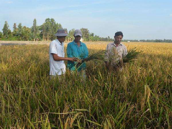 TH-Mẹo bảo quản lúa giống cho vụ sau nhà nông cần biết