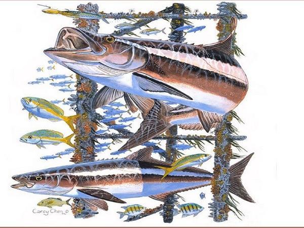 NT-Yếu tố để thành công: Mật độ nuôi cá bớp bao nhiêu là phù hợp?