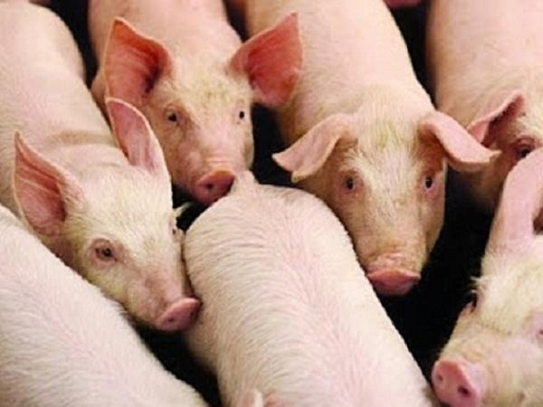 Cú sốc trên thị trường thịt lợn sau khi Trung Quốc ra lệnh cấm nhập khẩu