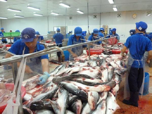 Xuất khẩu sang Anh tăng vọt, giá cá tra thời gian tới sẽ diễn biến ra sao?