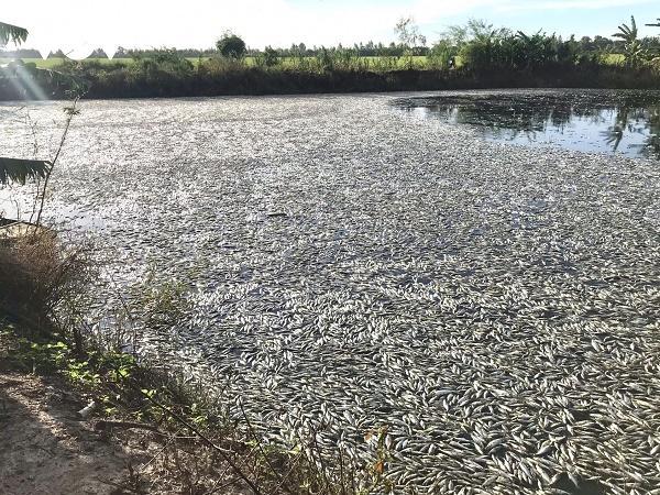 Khóc cạn nước mắt vì 38 tấn cá tra giống chết trước ngày bán, nghi do bị hãm hại