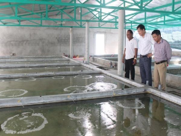 Nuôi ốc hương trong nhà, thu 10 tỷ mỗi năm tại Quảng Trị