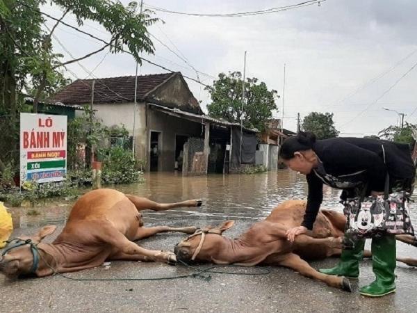Hỗ trợ con giống và thức ăn chăn nuôi cho đồng bào miền Trung