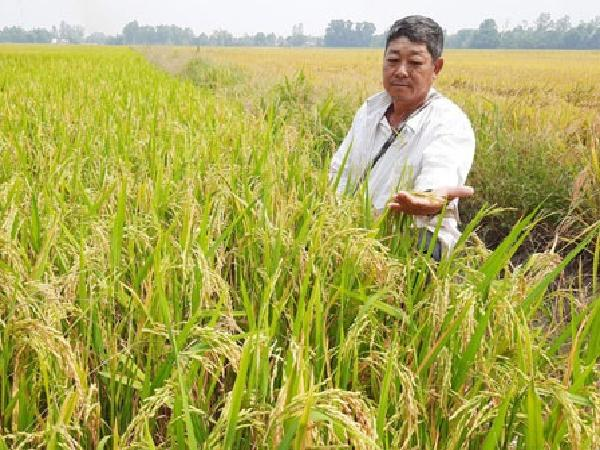 """Thủ đoạn tinh vi, nông dân trồng lúa miền Tây bị công ty """"ma"""" lừa đảo trắng trợn"""
