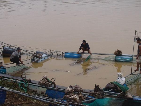 NT-Biện pháp tránh thiệt hại thủy sản nuôi mùa bão lũ