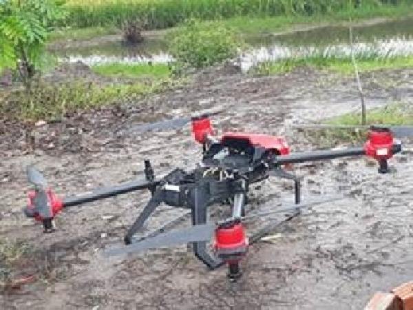 Sử dụng máy bay sạ lúa giúp giảm lượng phân bón, ngày công lao động