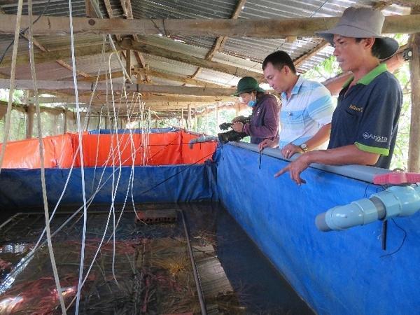 Mô hình nuôi lươn công nghệ cao - hướng đi mới hiệu quả