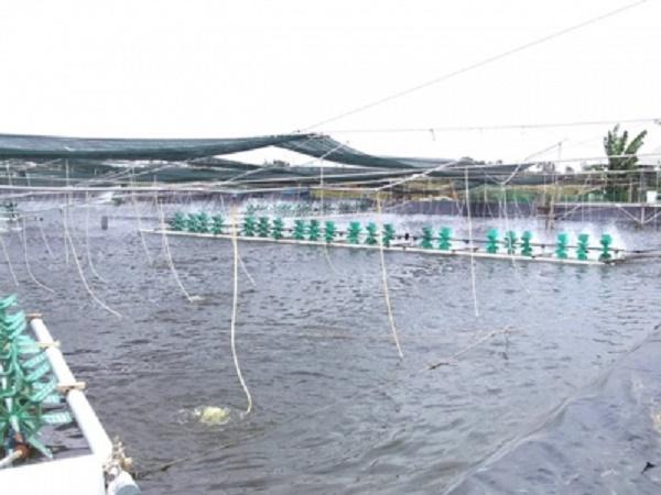 XL-Khắc phục ao nuôi thủy sản sau mưa, lũ