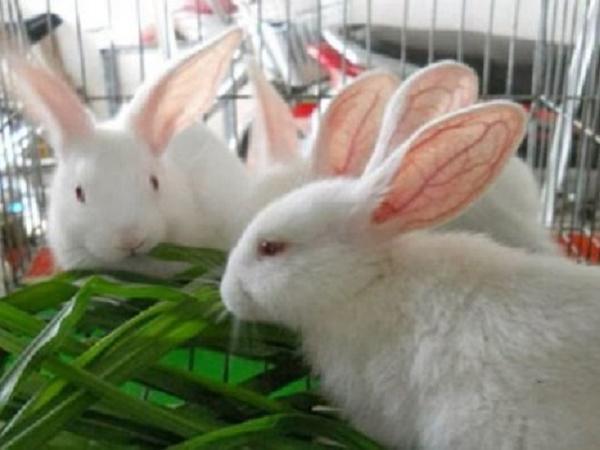 N-Kinh nghiệm nuôi thỏ ít bị dịch bệnh và mau lớn