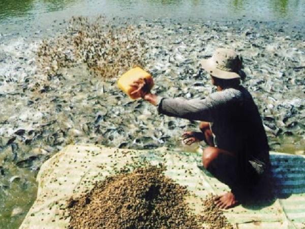 NT-Phòng tránh bệnh tật cho cá bằng cách cho ăn đúng kỹ thuật (Phần 2)
