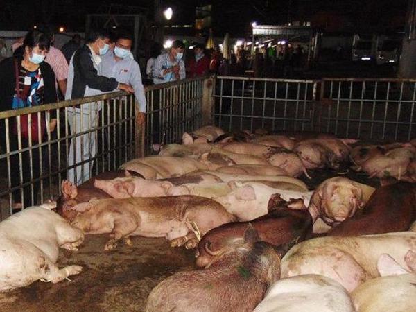 Lại thêm một tỉnh tái phát dịch tả lợn châu Phi, những tỉnh nào đang có dịch?