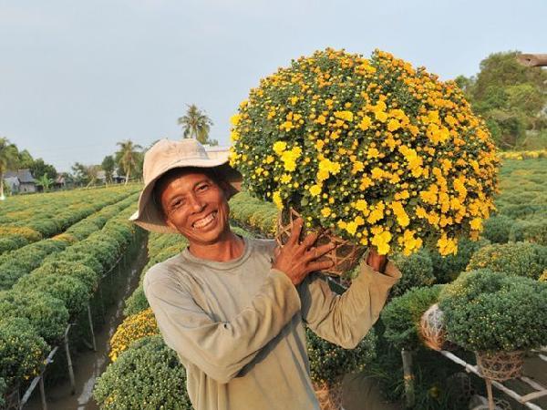 Mách nhỏ những loại cây giúp nông dân dễ kiếm tiền triệu trong dịp Tết