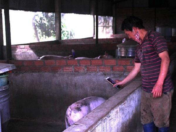 Xác định thân nhiệt cho lợn dưới 3 giây bằng điện thoại thông minh