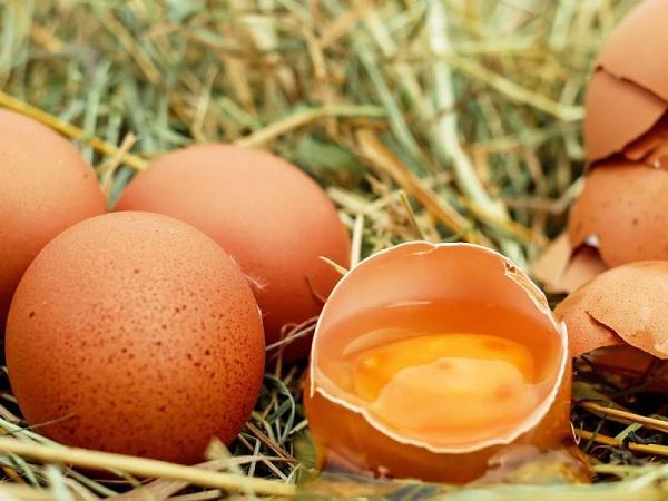 CB-Nguyên nhân gà đẻ trứng non và cách khắc phục