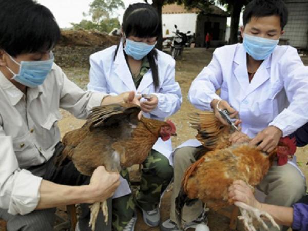 N-Một số biểu hiện của gà bệnh cần phải biết