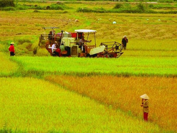 Cho phép chuyển mục đích sử dụng đất trồng lúa tại 3 tỉnh