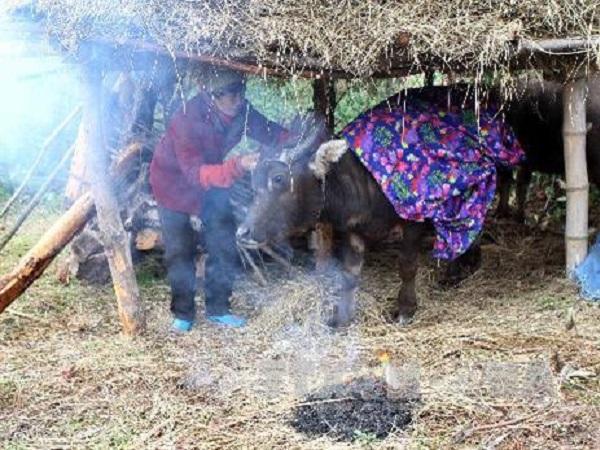 CS-Biện pháp phòng chống rét cho vật nuôi