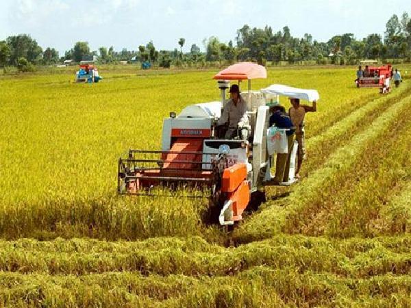 Giá gạo xuất khẩu lập kỉ lục mới vào đầu năm, tín hiệu cho một năm khởi sắc