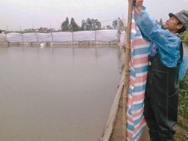 Chống rét cho thủy sản hiệu quả