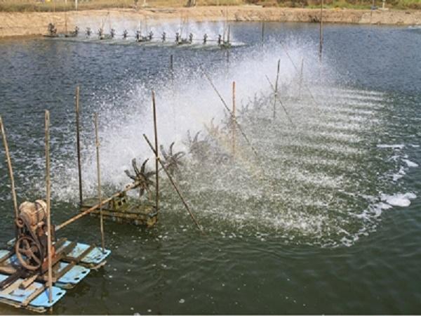 Lịch mùa vụ thả giống nuôi tôm nước lợ năm 2021 và những khuyến cáo quan trọng