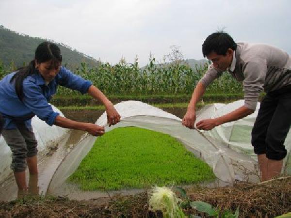 CS-Những biện pháp đơn giản mà hữu ích để chống rét cho cây trồng