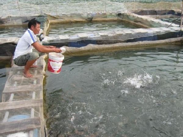 XL-Đáng chú ý: Một số mô hình xử lý nước thải nuôi tôm hiệu quả