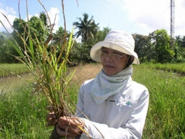 Cần quan tâm: Dự báo những loại dịch bệnh trên cây trồng vụ Đông Xuân