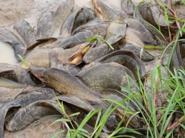 NT-Mật độ nuôi cá trê vàng lý tưởng trong hệ thống tuần hoàn