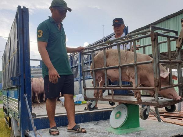 Diễn biến giá lợn hơi trong dịp Tết Nguyên đán 2021
