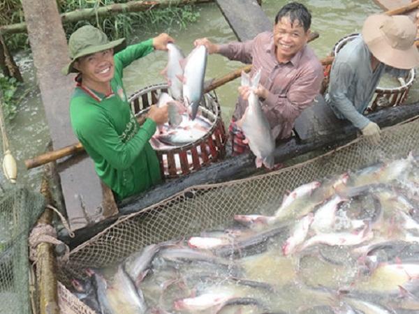 Các yếu tố chính tác động lên thị trường cá tra năm 2021