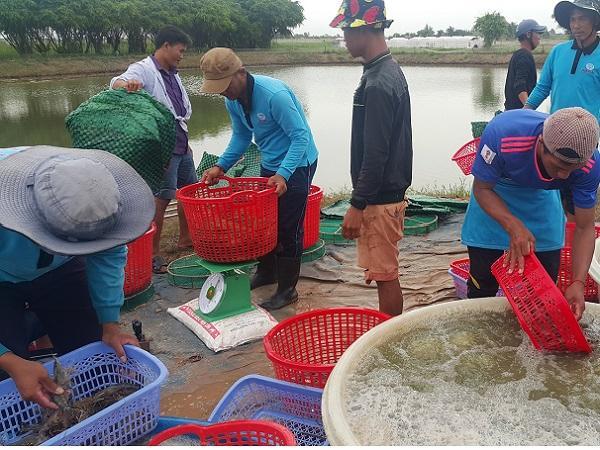 Tăng cường giám sát chất lượng hàng nông thủy sản xuất sang Trung Quốc
