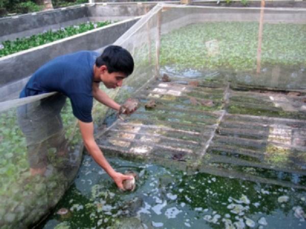 NT-Cung cấp dinh dưỡng cho ếch