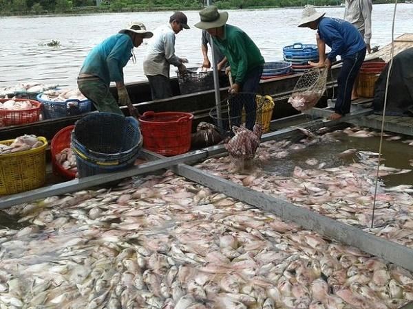 NT- Ngưỡng chịu mặn của thủy sản nuôi nước ngọt
