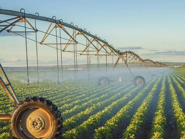 Làm nông theo phương thức hiện đại gặt hái nhiều thành công