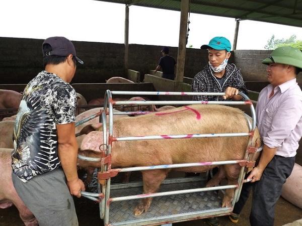Nhu cầu thấp, giá lợn hơi giảm còn bao nhiêu tiền 1kg?